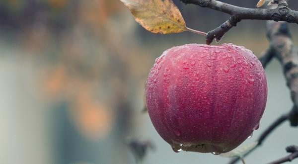 Der Apfel auf dem Bild steht für Gesundheit. Die Gesundheit fördern durch Schatzsuche statt Fehlerfahndung, so heißt das Motto des Salute-Programms. Kurs, den das Gesundheitskolleg in Marburg anbietet.